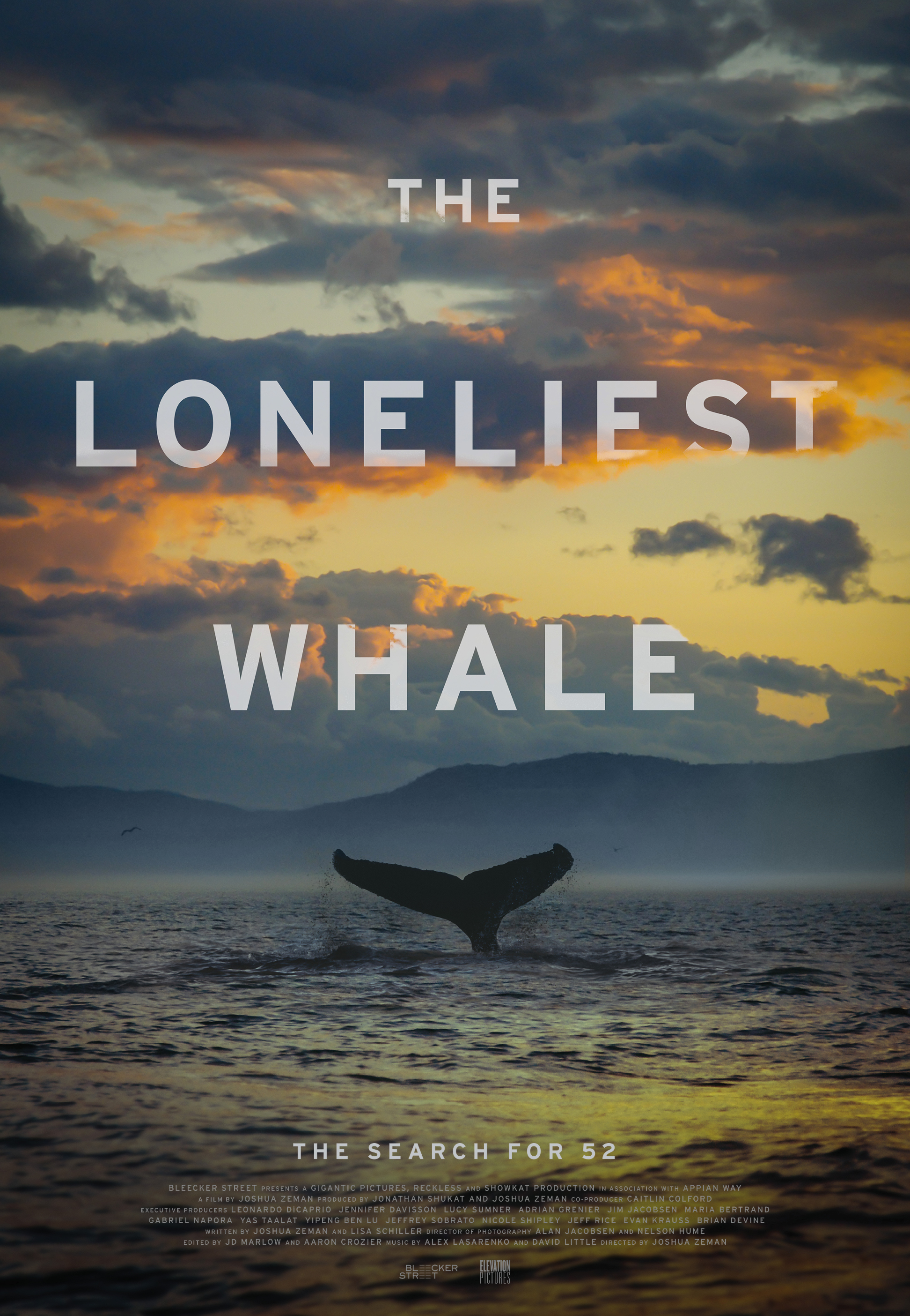 The Loneliest Whale